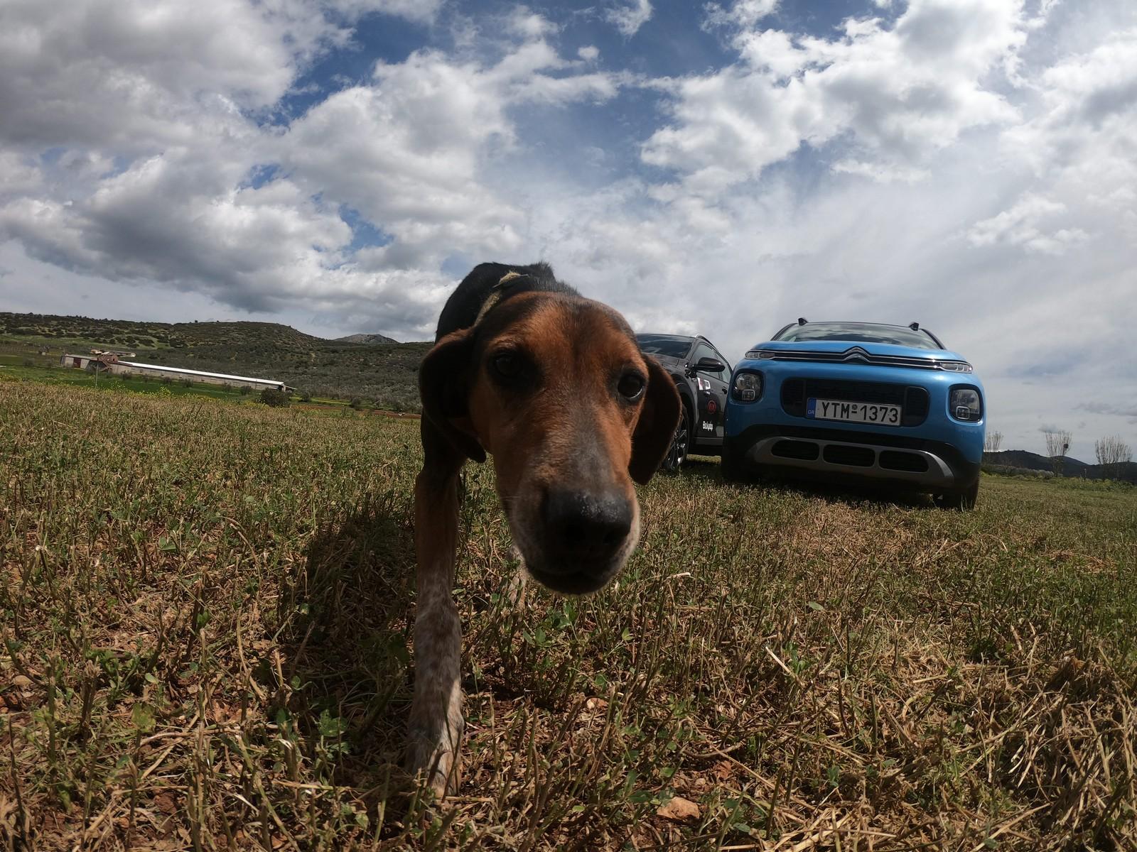 VW T-Roc Citroen C3 Aircross Kia Stonic